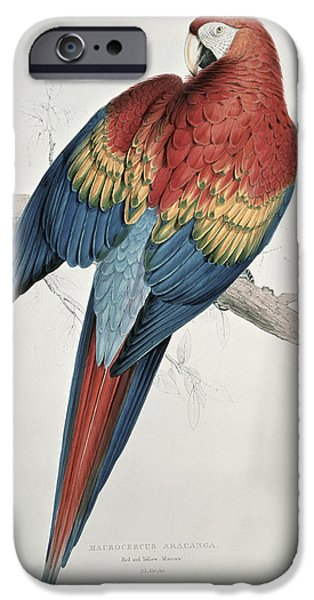 Recently Sold -  - Birds iPhone Cases - Red and Yellow Macaw  iPhone Case by Edward Lear