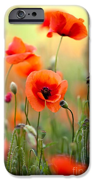 Farm iPhone Cases - Red Corn Poppy Flowers 06 iPhone Case by Nailia Schwarz