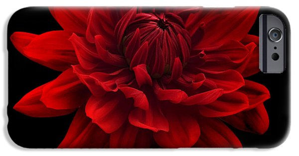 Canvassing iPhone Cases - Red Dahlia Flower Black Background iPhone Case by Natalie Kinnear