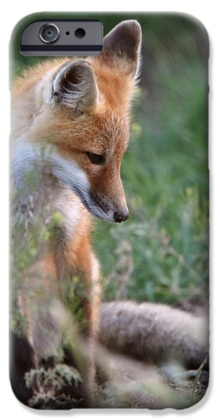 Pups Digital iPhone Cases - Red Fox pup outside its den iPhone Case by Mark Duffy