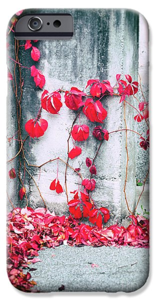 IPhone 6 Case featuring the photograph Red Ivy Leaves by Silvia Ganora