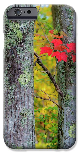 Red Leaves IPhone 6 Case