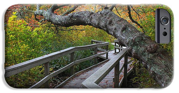 Cape Cod iPhone Cases - Red Maple Swamp Cape Cod National Seashore iPhone Case by John Burk