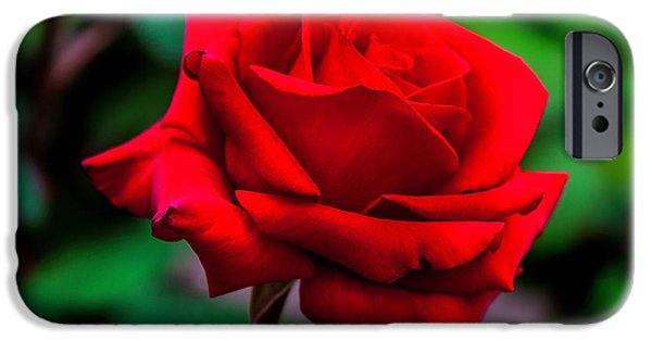 Red Rose iPhone 6 Case - Red Rose 2 by Az Jackson