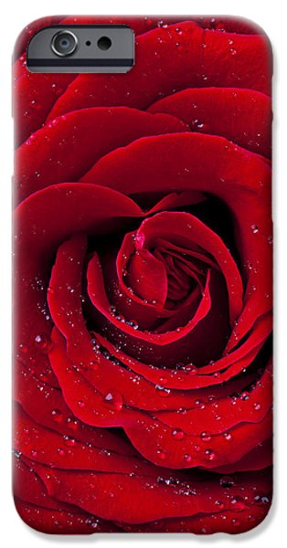 Red Rose iPhone 6 Case - Red Rose With Dew by Garry Gay
