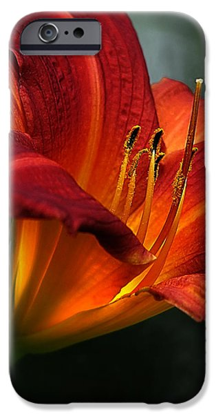 Asiatic Lily iPhone Cases - Red Seduction 2 iPhone Case by John  Poon