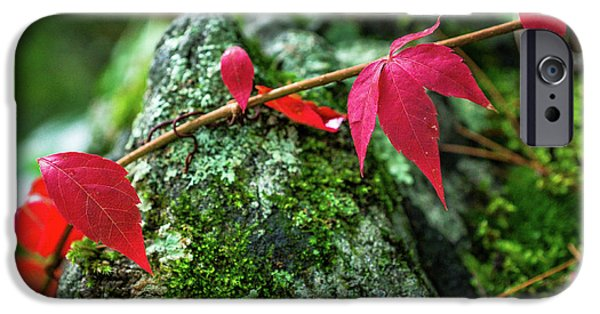 IPhone 6 Case featuring the photograph Red Vine by Bill Pevlor