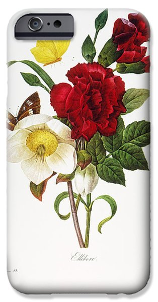1833 Photographs iPhone Cases - Redoute: Hellebore, 1833 iPhone Case by Granger