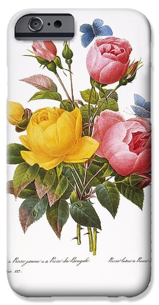 1833 Photographs iPhone Cases - Redoute: Roses, 1833 iPhone Case by Granger