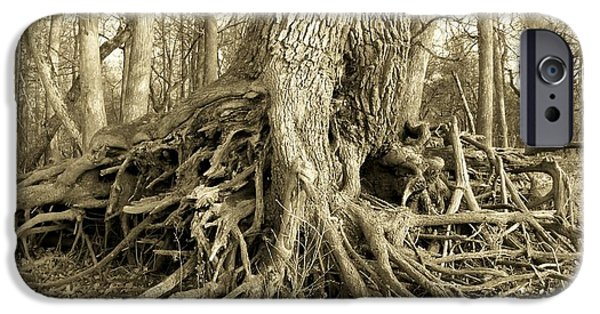 Chiefland iPhone Cases - River Bank Oak iPhone Case by Sheri McLeroy