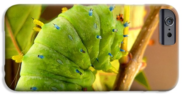 IPhone 6 Case featuring the photograph Robin Moth Caterpillar by Claire Bull