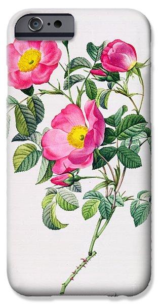 Rose Petals iPhone Cases - Rosa Lumila iPhone Case by Pierre Joseph Redoute