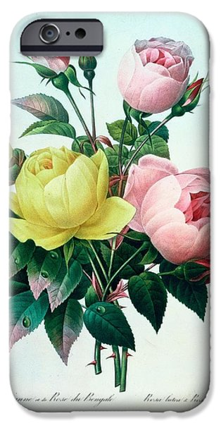 Botanical Paintings iPhone Cases - Rosa Lutea and Rosa Indica iPhone Case by Pierre Joseph Redoute
