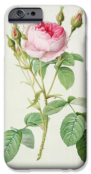 Spring Drawings iPhone Cases - Rosa muscosa multiplex iPhone Case by Pierre Joseph Redoute