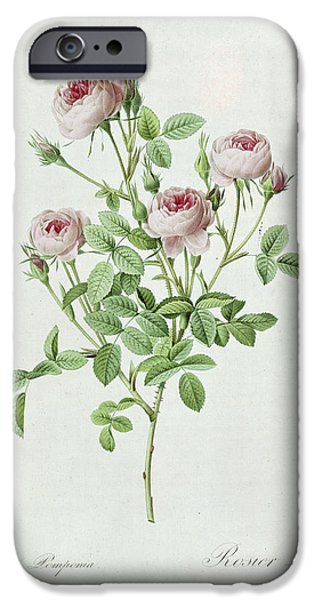 Langlois iPhone Cases - Rosa Pomponia iPhone Case by Henri Joseph Redoute