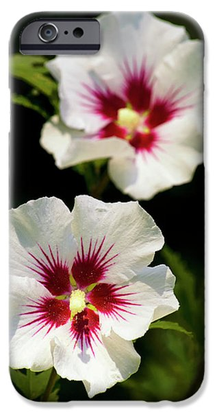 IPhone 6 Case featuring the photograph Rose Of Sharon by Christina Rollo