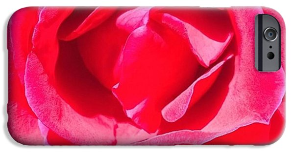 Blue iPhone 6 Case - #roses Are #red ...#violets Are #blue by Shari Warren