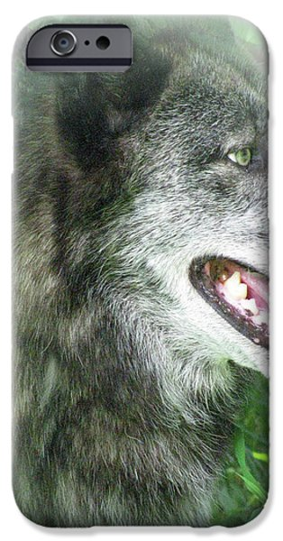 Arctic Wolf Mixed Media iPhone Cases - Run In The Fern iPhone Case by Debra     Vatalaro