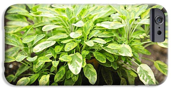 Aromatic iPhone Cases - Sage plant iPhone Case by Elena Elisseeva