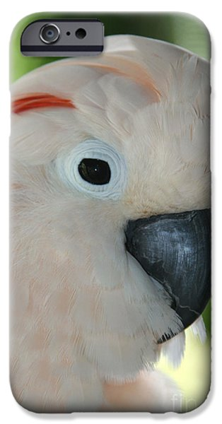 Cockatoo iPhone Cases - Salmon Crested Moluccan Cockatoo iPhone Case by Sharon Mau