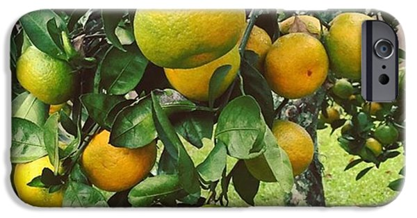 Orange iPhone 6 Case - Satsumas..we Wait All Year For These by Scott Pellegrin