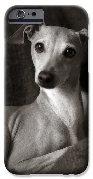 Rescued Greyhound iPhone Cases - Say What Italian Greyhound iPhone Case by Angela Rath