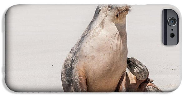 Sea Lion 1 IPhone 6 Case by Werner Padarin