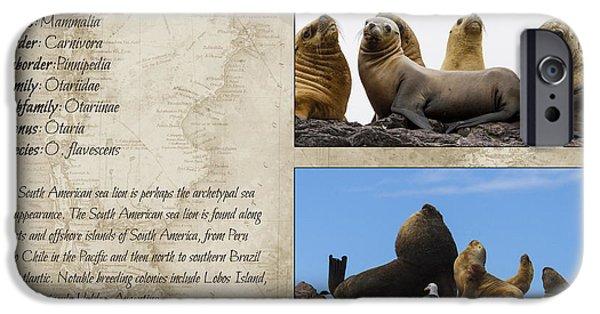 Marine iPhone Cases - Sea Lion taxonomic card I iPhone Case by Hernan Caputo