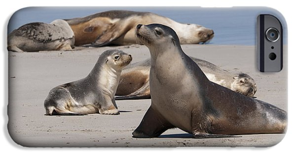 IPhone 6 Case featuring the photograph Sea Lions by Werner Padarin