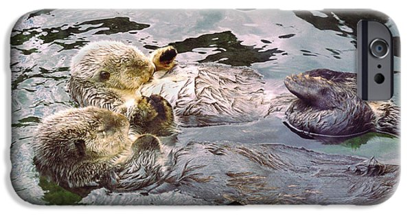 Beach Pyrography iPhone Cases - Sea Otters Holding Hands iPhone Case by BuffaloWorks Photography