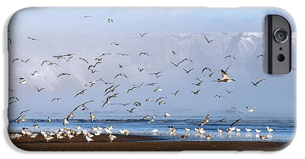 Flying Seagull iPhone Cases - Seagulls I iPhone Case by Svetlana Sewell