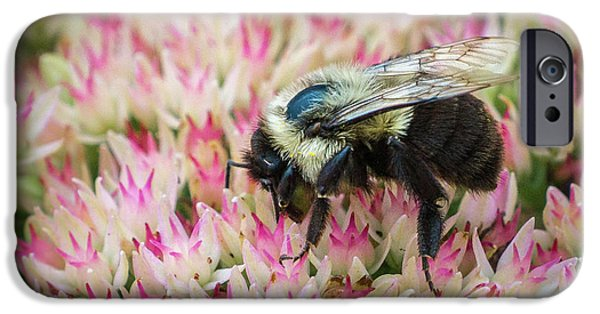 IPhone 6 Case featuring the photograph Sedum Bumbler by Bill Pevlor