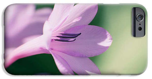 IPhone 6 Case featuring the photograph She Listens Like Spring by Linda Lees