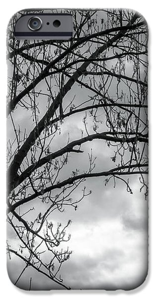 Greyscale iPhone Cases - Silhouetree iPhone Case by Wim Lanclus
