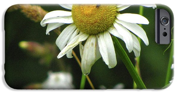 Resilience iPhone Cases - Smiley Face Ox-Nose Daisy iPhone Case by Sean Griffin
