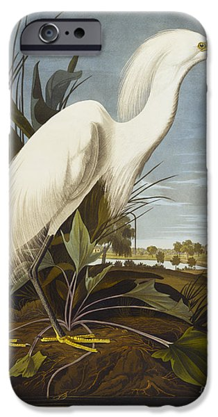 Animals iPhone Cases - Snowy Heron iPhone Case by John James Audubon