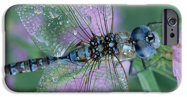 New Individuals iPhone Cases - Southern Hawker Dragonfly Aeshna Cyanea iPhone Case by Tim Fitzharris