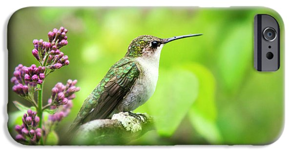 Spring Beauty Ruby Throat Hummingbird IPhone 6 Case