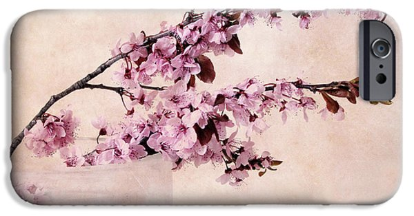 Cherry Blossoms iPhone Cases - Spring Cherry iPhone Case by Jessica Jenney