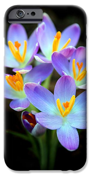 IPhone 6 Case featuring the photograph Spring Crocus by Jessica Jenney