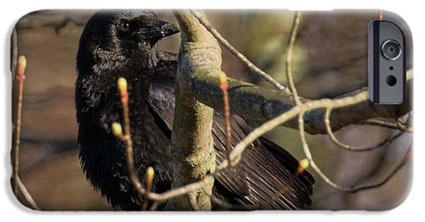 IPhone 6 Case featuring the photograph Springtime Crow Square by Bill Wakeley
