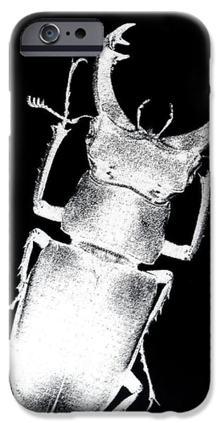 Recently Sold -  - Fauna iPhone Cases - Stag beetle iPhone Case by Gabriela Insuratelu
