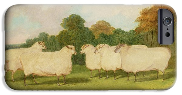 Farm Stand iPhone Cases - Study of Sheep in a Landscape   iPhone Case by Richard Whitford
