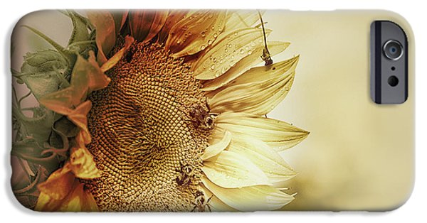 Sunflower Seeds iPhone 6 Case - Sunflower Days by Susan Capuano