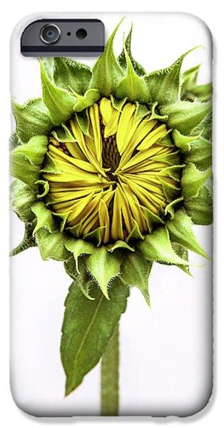 Sunflower Seeds iPhone 6 Case - Sunflower by Diane Diederich