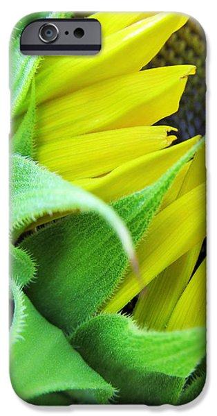 Sunflower Seeds iPhone 6 Case - Sunflower by Marianna Mills