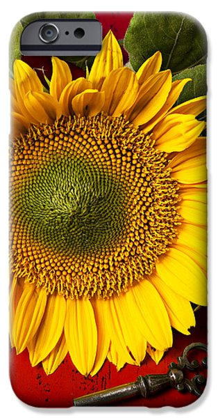 Sunflower Seeds iPhone 6 Case - Sunflower With Old Key by Garry Gay