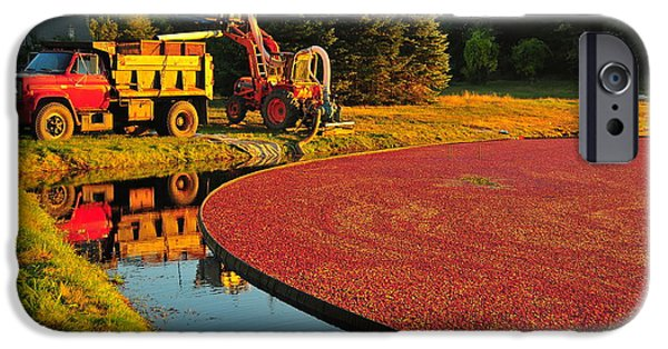 Reflection Harvest iPhone Cases - Sunset over Cranberry Bog iPhone Case by Catherine Reusch  Daley