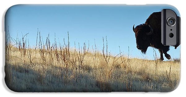American Bison iPhone Cases - Sunset Ridge iPhone Case by John Blumenkamp