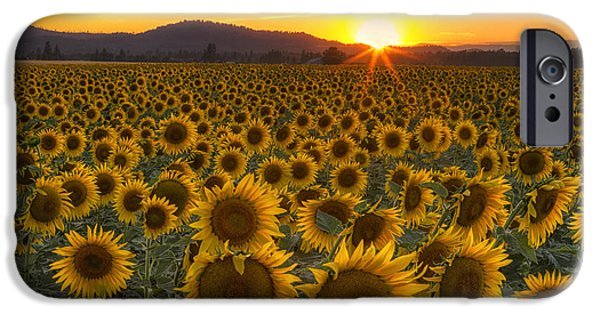 Sunflower Seeds iPhone 6 Case - Sunshine And Happiness by Mark Kiver